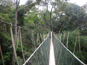 National Park (Taman Negara) Malaysia 1/undefined by Tripoto