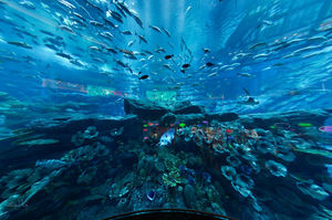 Dubai Aquarium & Underwater Zoo 1/undefined by Tripoto