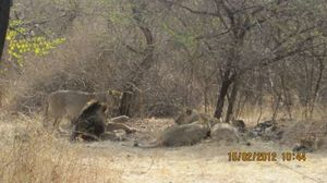 Gir National Park and Wildlife Sanctuary 1/undefined by Tripoto
