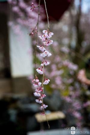 Arashiyama 1/undefined by Tripoto