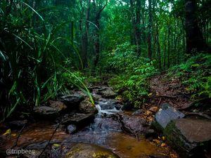 Kodachadri - Trek with the rain