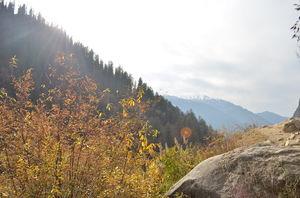 Lesson from mountain dogs- Keep faith- Kheerganga, Parvati Valley