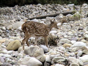 In search of Man Eaters of Kumaon: Jim Corbett