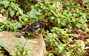 5 'Birding' Areas in Karnataka Not to Miss