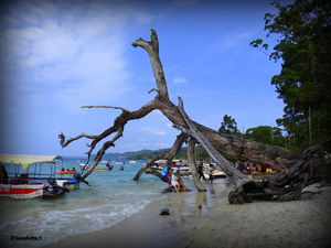 Andamans – the coral treasures of India – Part 3 – #Havelock Island #TravelIndia