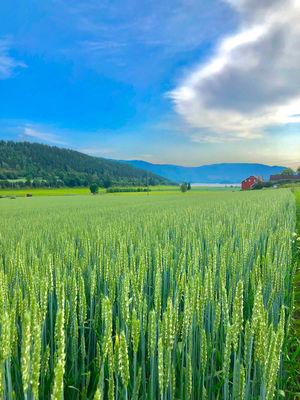 Road trip to Flåm