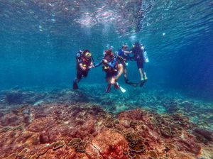 A Mermaid Life : First Scuba Experience In Koh Phi Phi,Thailand