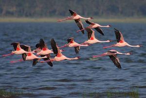 Let's Spot Migratory Birding Destinations in India!