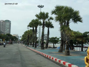 Coral Island Resort Rawai Phuket Thailand 1/undefined by Tripoto
