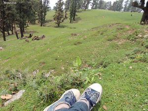 Chopta: Mini Switzerland