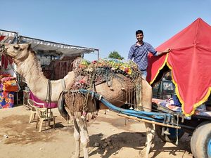 When its Rajasthan ,go colourful