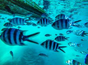 Glass Bottom Boat Snorkeling Tour in Mauritius: Your Guide to Explore the  Exotic Underwater World