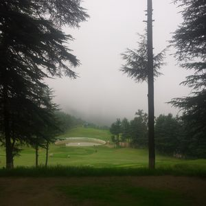 The Naldehra Golf Course 1/1 by Tripoto
