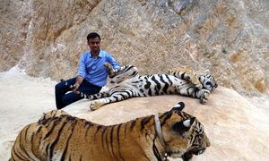 Tiger Temple Lum Sum Kanchanaburi Thailand 1/17 by Tripoto