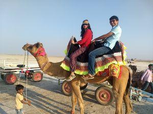 Candid Camel in Rann on Run!!