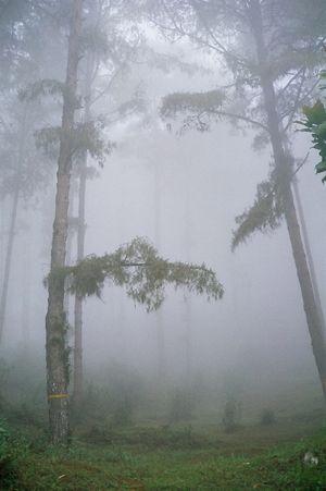 Tinchuley- Darjeeling's hidden treat