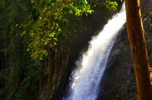 Soochipara Waterfalls 1/undefined by Tripoto