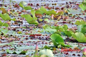 Yamuna Bio-diversity Park – a nature reclamation story