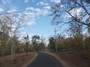 A trip to Pench-Patalkot with childhood friends