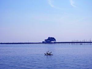Chilka : The Lagoon of Evolution ; A memoir