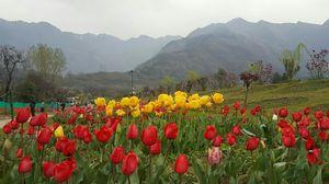 Kashmir in spring