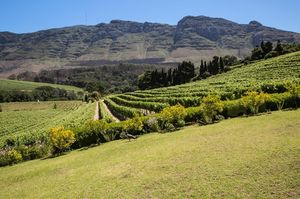 Cape Winelands 1/undefined by Tripoto