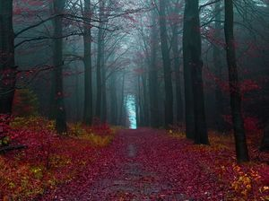 Black Forest 1/undefined by Tripoto