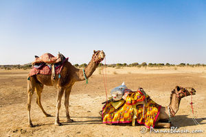 Bikaner Camel Safari Day Tours 1/1 by Tripoto