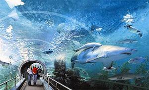 SEA LIFE Bangkok Ocean World 1/10 by Tripoto