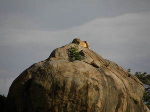 Serengeti 1/undefined by Tripoto