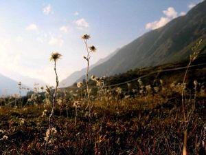 The End Of The Trek - Kheerganga, Parvati Valley