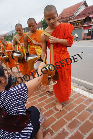 Luang Prabang's Traditional Alms Giving Ceremony