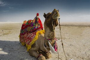 Rann Utsav: NOT Worth The Effort, Distance And Money!