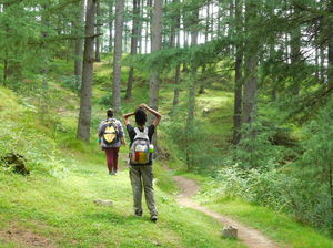 Do You Know About These Secret Trails around Manali?