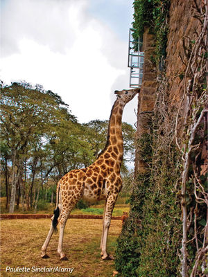 Giraffe Manor 1/undefined by Tripoto