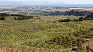 Skillogalee Winery And Vineyard 1/1 by Tripoto