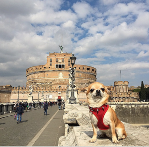 11 Dogs of Instagram Who Travel Better Than We Do!