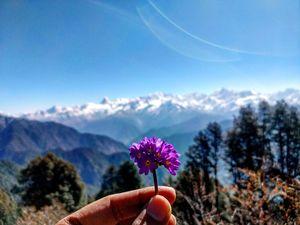 A Trek to Heavenly Meadows: Dayara Bugyal
