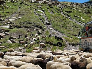 Manali-Leh Roadtrip: Every Traveller's Dream