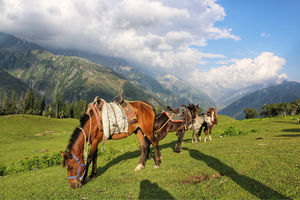 Table Top - Sonmarg