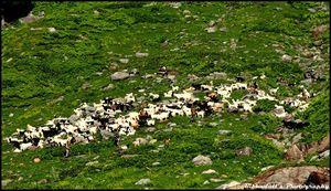 Hampta Pass- A trek to 14500ft