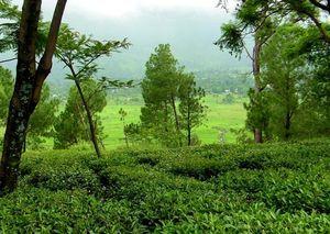 Darjeeling in Himachal Pradesh: Palampur