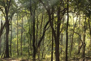 ESCAPE TO THE JUNGLE : SATPURA NATIONAL PARK