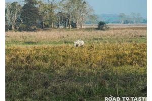 Kaziranga National Park - What to expect from the jungle safaris in the wild