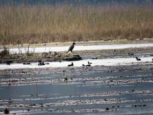 Uttar Pradesh Bird Festival 2018: a successful boost for ecotourism