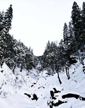 Season's First Snowfall in the Mesmerizing Valley of Tirthan/Jibhi