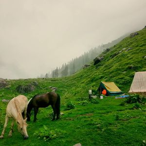 Hampta pass trek, a must do in summer.