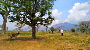 Motorcycle Diaries: Ooty To Coonoor Through Bandipur National Park