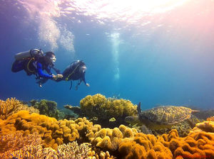 Scuba diving in Chapel, Apo Island: Finding love and beauty under the waves