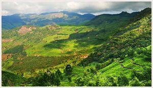 Kannan Devan Hills 1/undefined by Tripoto